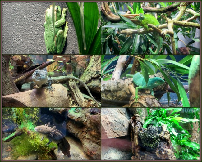 Collagesreptiles