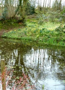 The Dingley Dell
