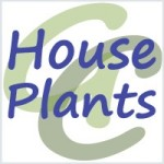 Group logo of House Plants