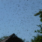 1-incoming-swarm